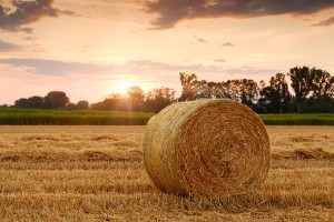 straw-bales-3521063__340